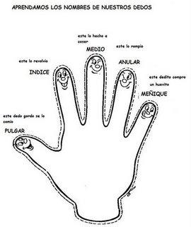 Dedos mano