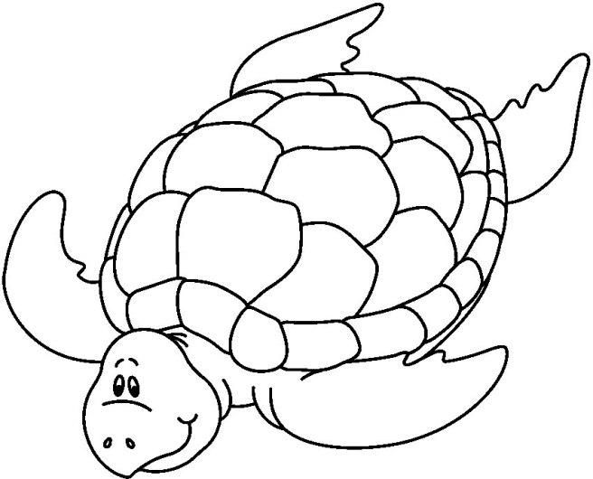 SEA_TURTLE_BW