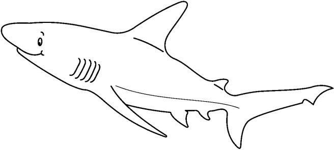 SHARK2_BW