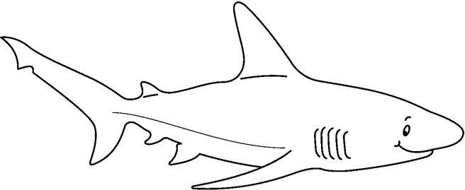 SHARK6_BW